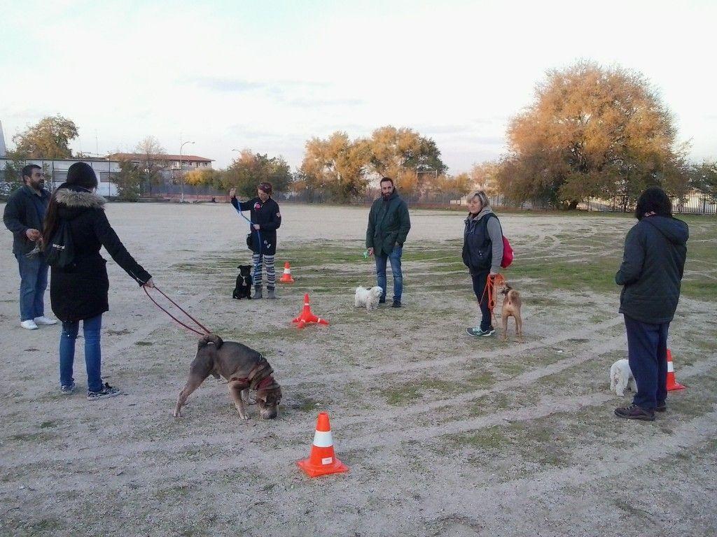 Exhibición adiestramiento Canino